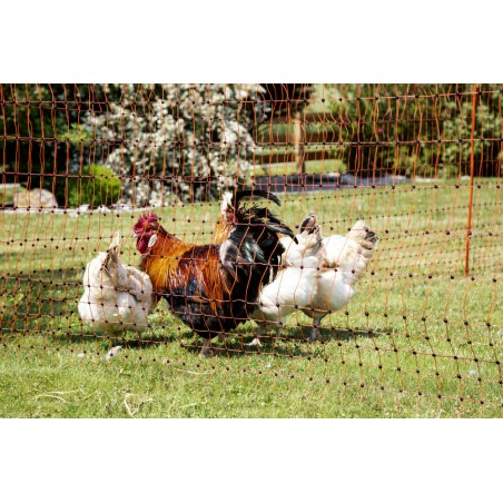 Hønsenetting , 50m, 112 cm double spike